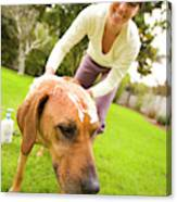 A Woman Gives Her Rhodesian Ridgeback Canvas Print