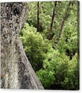 A Young Boy Climbs In Yosemite, June Canvas Print