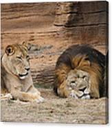 African Lion Couple 3 Canvas Print