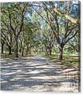 Lowcountry Allee Of Oaks Canvas Print