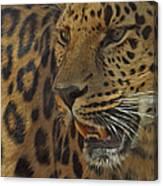 Amur Leopard 1 Canvas Print