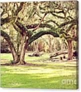 Ancient Oaks Canvas Print