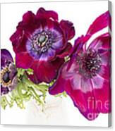 Anemone Trio Canvas Print