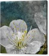 Apple Blossom Photoart Vi Canvas Print