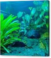 Aquariums Canvas Print
