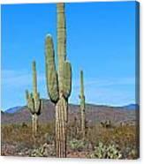 Arizona Desert Canvas Print