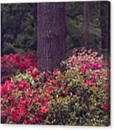 Around A Tree Canvas Print