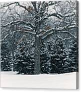 As The Snow Flies Canvas Print