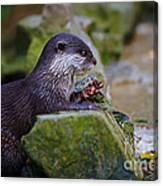 Asian Small Clawed Otter Canvas Print