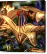 Asiatic Lily Canvas Print
