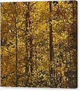 Aspen Glow Vertical Canvas Print