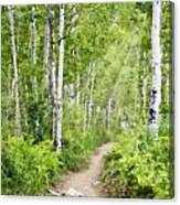 Aspen Path Impasto Canvas Print
