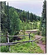 Aspen Trees In Vail - Colorado Canvas Print