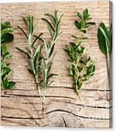 Assorted Fresh Herbs Canvas Print