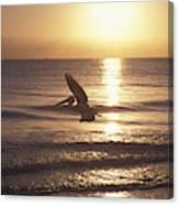 Australian Pelican Glides At Sunrise Canvas Print