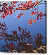 Autumn Blaze Canvas Print