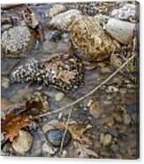 Autumn Creek Canvas Print