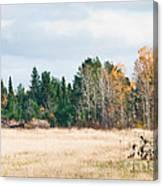 Autumn Field Canvas Print