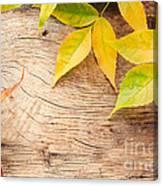 Autumn Forest Background Canvas Print