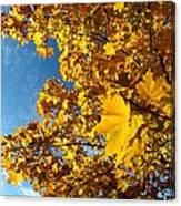 Autumn Splendor 9 Canvas Print