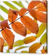 Autumn Upshot Canvas Print