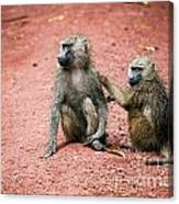 Baboons In African Bush Canvas Print