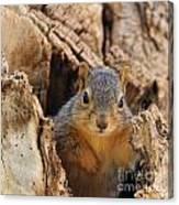Baby Fox Squirrel Canvas Print