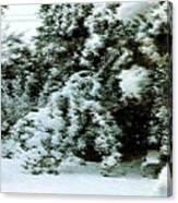 Backyard Snow Canvas Print