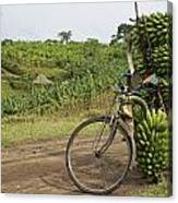 Banana Bike Canvas Print