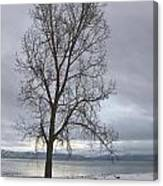 Bare Tree On A Wintery Tahoe Shoreline Canvas Print