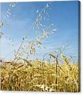Barley And Oat Vertical Canvas Print