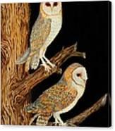 Barn Owl Duo Canvas Print