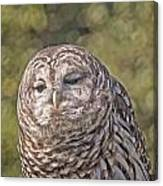 Barred Hoot Owl Photo Art Canvas Print