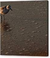 Beach Wildlife Canvas Print