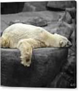 Bear On A Break Canvas Print