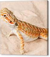 Bearded Dragon Pogona Sp. On Sand Canvas Print