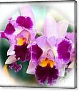 Beautiful Array Of Purple Butterfly Orchids Canvas Print