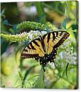 Beautiful Butterfly Pollination Canvas Print