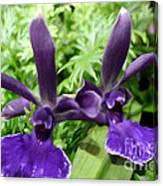 Beautiful Orchid Flower  Canvas Print