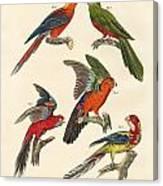 Beautiful Parrots Canvas Print