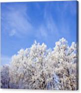 Beautiful Winter Landscape Canvas Print