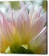 Beauty From Behind  Canvas Print