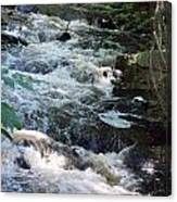Beaver Brook Canvas Print