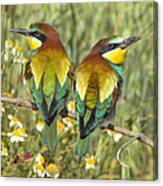 Bee-eaters Canvas Print