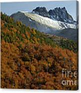 Beech Forest, Chile Canvas Print
