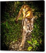 Belize Mountain Lion Canvas Print