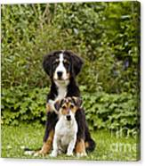 Bernese Mountain & Jack Russell Puppies Canvas Print