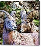Bighorns Canvas Print
