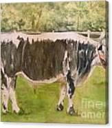 Bill's Bull Canvas Print