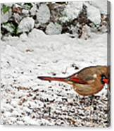 Bird In Winter Canvas Print